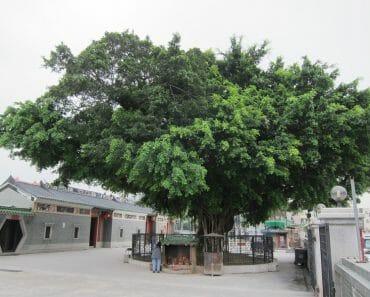 元朗大樹下天后古廟
