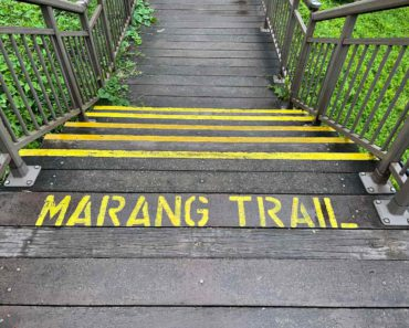 Marang Trail to HortPark. A Scenic 4km walk.